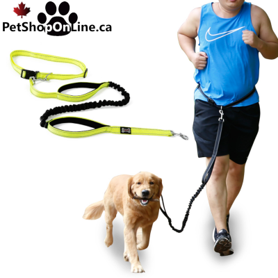 Sports leash + belt, for dog