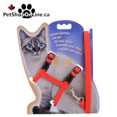 Harness for cat + leash
